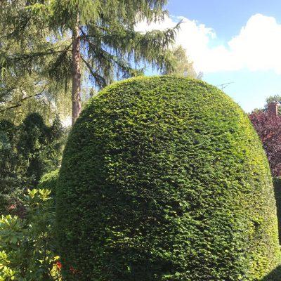 Gartenpflege Solln München von Baumpflege A. Hecher_2