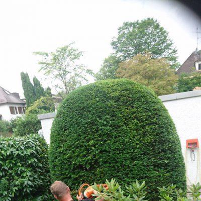 Gartenpflege Solln München von Baumpflege A. Hecher_3