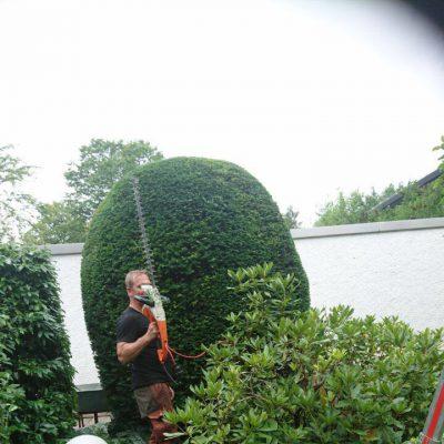 Gartenpflege Solln München von Baumpflege A. Hecher_4